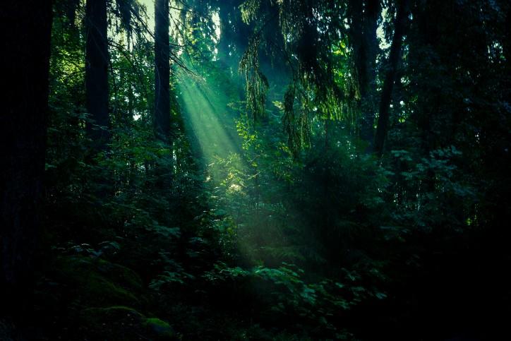 フィンランドの北欧神話の森で本格ピクニック